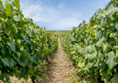 The Route des Vins de Provence Travels Through some of the Finest Vineyards in the World